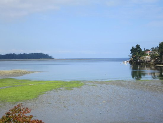 Pacific Shores Resort and Spa: Low tide