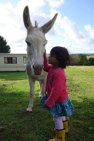 Treglown House: Paddy the donkey