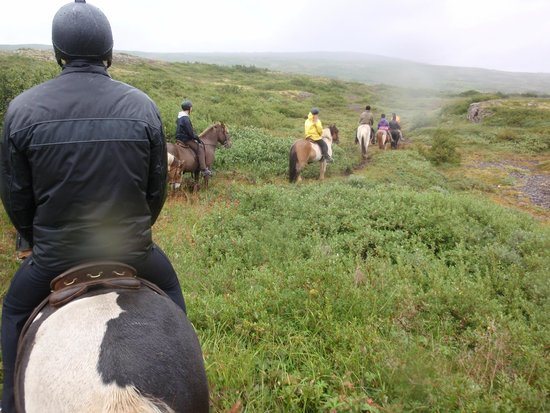 Odin Tours : Paseo en caballos islandeses