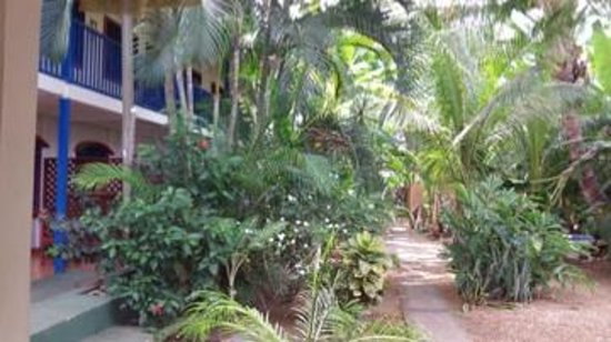 Beds on Bohio: Ground