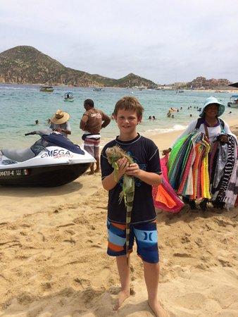 Iguana at Medano Beach!