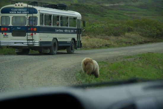 Camp Denali : Day Hike wildlife sighting