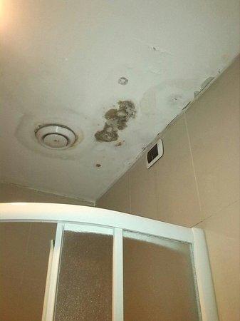 Hotel Nettuno: Muffa sopra la doccia