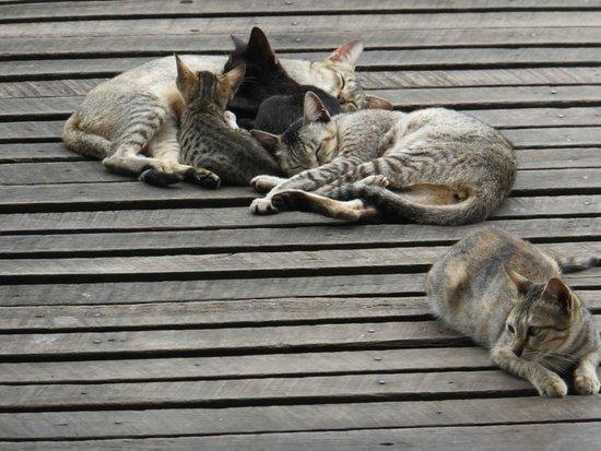 Nga Phe Kyaung Monastery: 親猫
