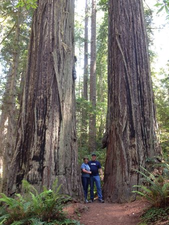 Lady Bird Johnson Grove: Towering trees and lush forests