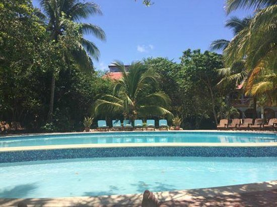 Hamanasi Adventure and Dive Resort : Pool during the day
