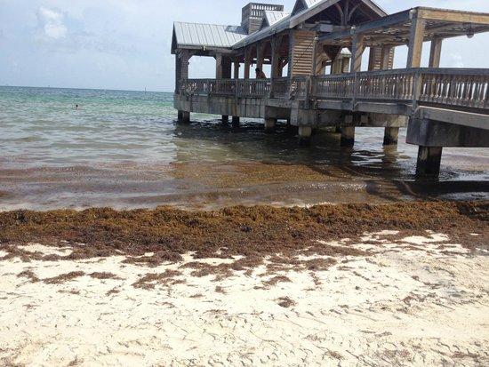 The Reach Key West, A Waldorf Astoria Resort: Une mer d'algues...toute la journée...personne qui nettoie!