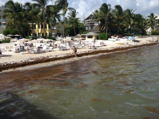 The Reach Key West, A Waldorf Astoria Resort: faut chevaucher les algues...