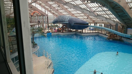 Baleine photo de aquaboulevard paris tripadvisor for Piscine 75015