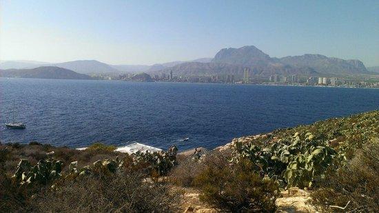 Benidorm Island : El secadal de chunberas con Benidorm al fondo