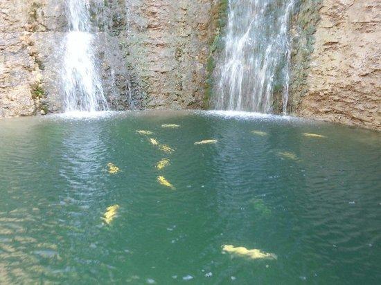 Dogwood Canyon Nature Park : Last waterfall.  Aug 19, 2014