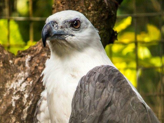 National Zoological Gardens of Sri Lanka: Eagle