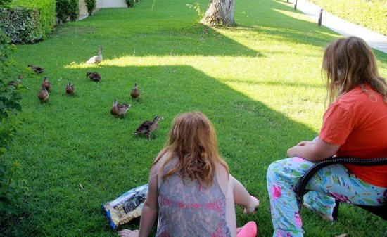 Omni Rancho Las Palmas Resort & Spa: We loved our morning duckling visitors.