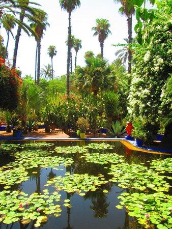Jardin Majorelle : waterlilies
