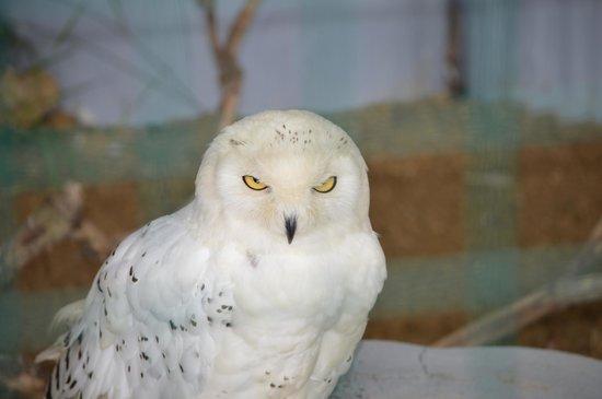 British Wildlife Centre: Photo of owl