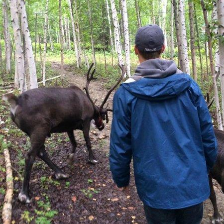Running Reindeer Ranch: Roaming Reindeer