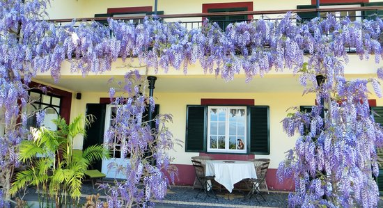Quinta do Cabouco: Wisteria in April.