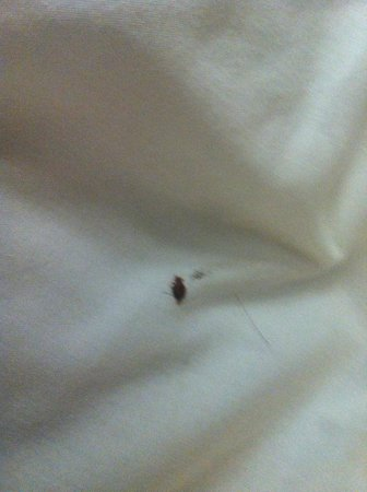 Extended Stay America - Seattle - Bellevue - Factoria : BED BUGS!!!