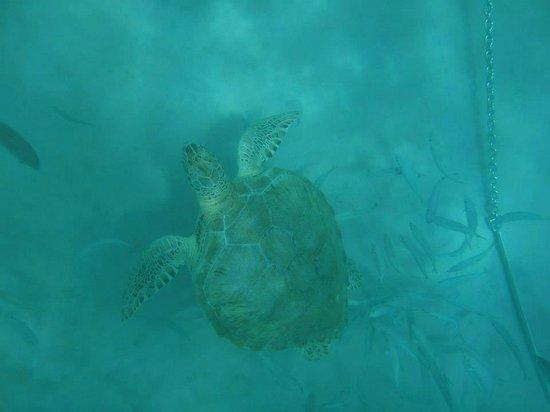 The Crane Resort: Turtle