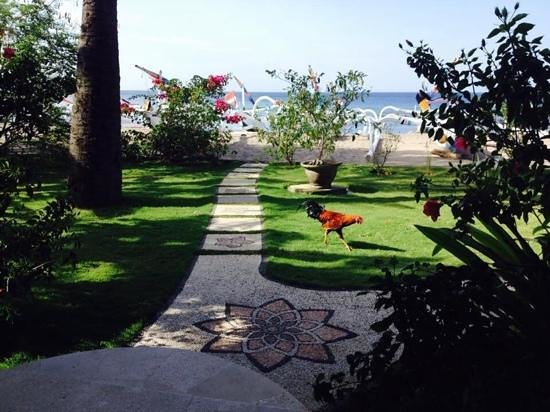 Palm Garden Amed Beach & Spa Resort : villa 10 and visitor!
