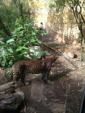 Bioparc de Doué la Fontaine : Leopard canyon
