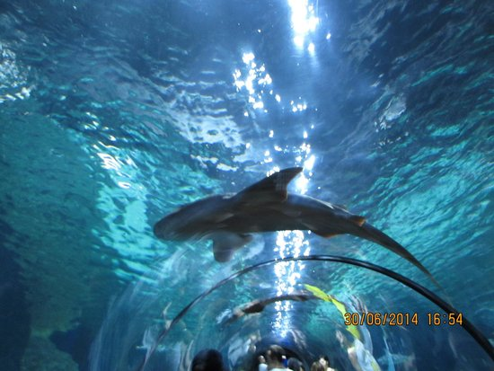 Blue Sea Puerto Resort : Siam park