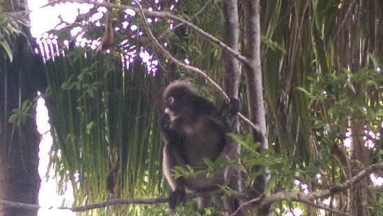 Berjaya Langkawi Resort - Malaysia: Monkey eating what he stolen