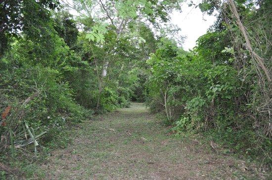 Hacienda Chichen: jungle path