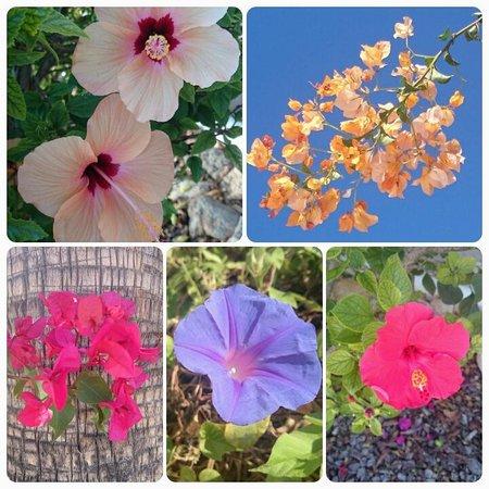 La Finca Ibiza : The flowers of la Finca