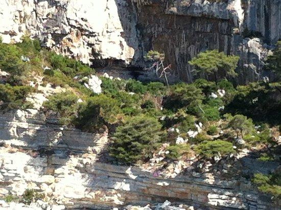 Calanque de Morgiou : Vegetazione molto bassa della Calanque a causa del vento