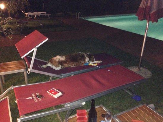 Agriturismo Savernano: A bordo piscina la sera dopo cena, una favola!!
