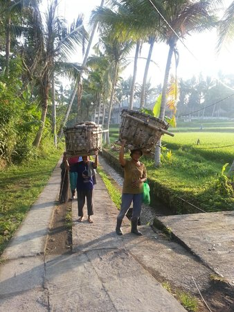 Ubud Padi Villas: Locals rice farmers