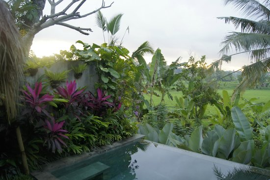 Ubud Padi Villas: View