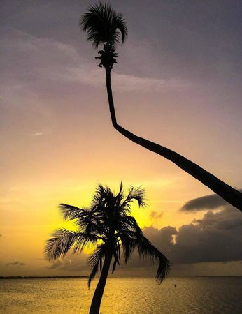 Melia Coco Beach : gorgeous sunset