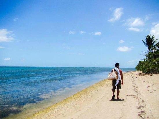 Melia Coco Beach : beach