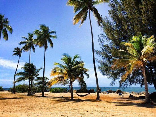 Gran Melia Golf Resort Puerto Rico : beach and hammock