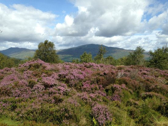 The Hairy Coo - Free Scottish Highlands Tour : The Highlands