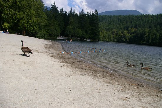 Alice Lake Provincial Park: some of the lake's residents