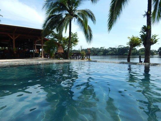 Tortuga Lodge & Gardens: Pool