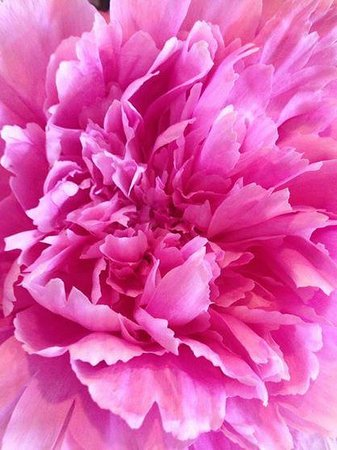 Finger Lakes Wellness Center & Health Spa: Just love the smell of our peonies!