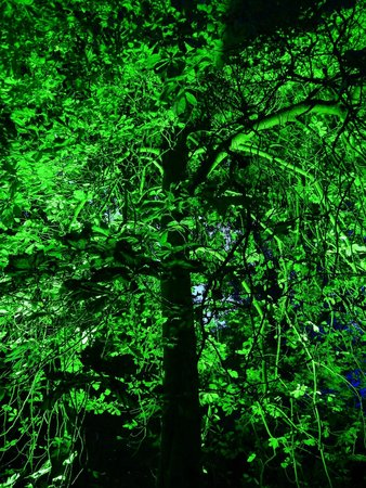 Robin Hill Country Park: Electric Woods August 2014