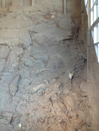 Dinosaur National Monument: wall of fossils in Gallery Room