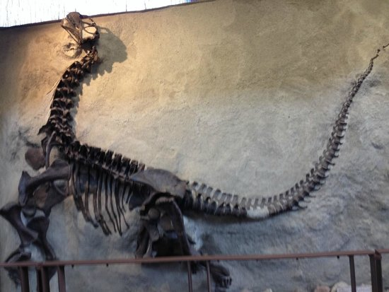 Dinosaur National Monument: Cast of fossilized dinosaur