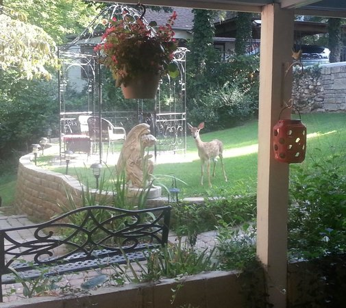 Red Bud Manor: 1 of 3 baby deer outside our room in the morning