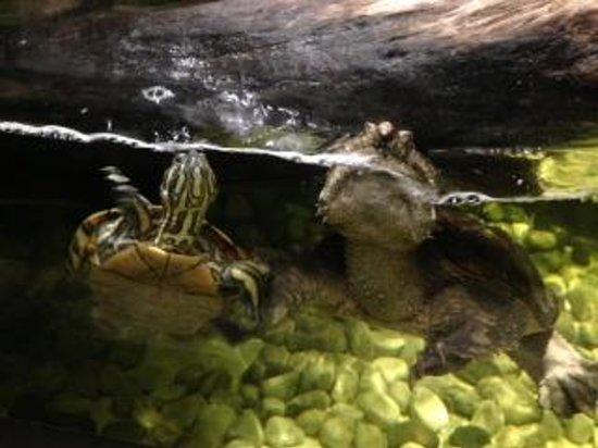 Foto de acuario inbursa ciudad de m xico tortugas for Acuario tortugas