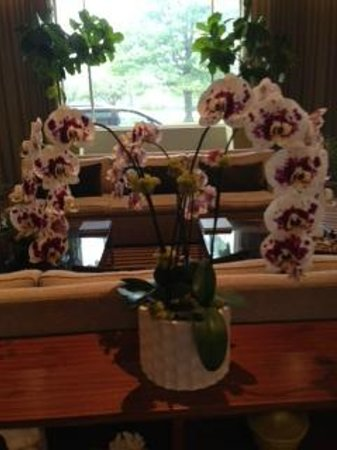 I Hotel & Conference Center: One of their beautiful orchids....
