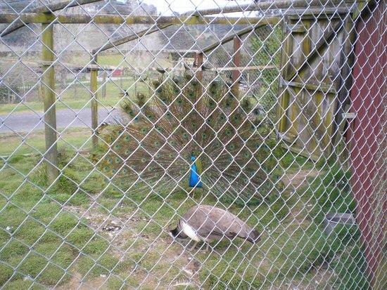 Marshalls Animal Park