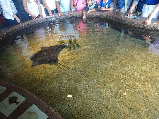 Monterey Bay Aquarium: Tanque para tocar os peixes
