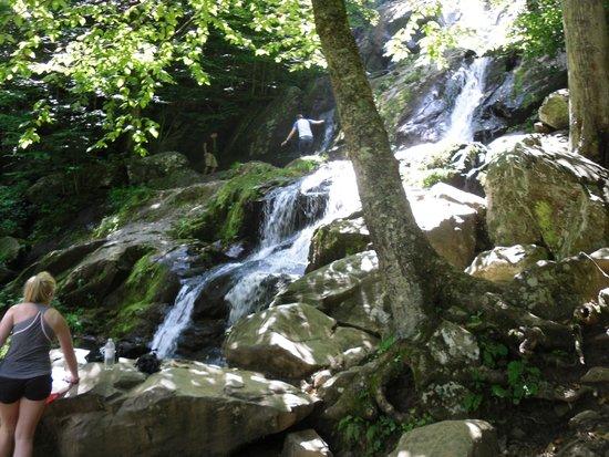 Dark Hollow Falls : Dark Hallow Falls