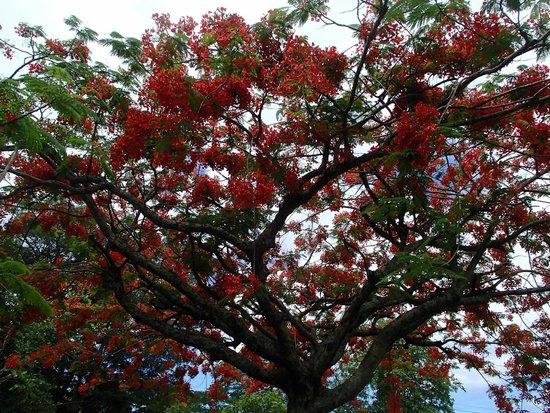 Dominica Botanic Gardens: lovely foliage